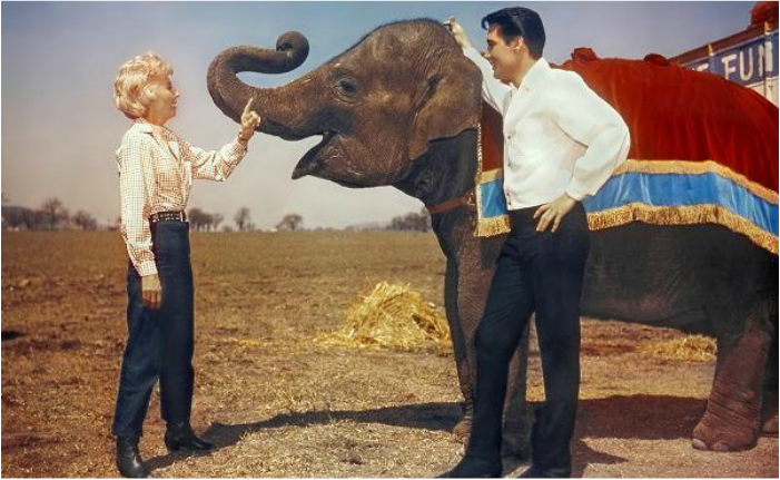 Barbara Stanwyck, Elvis Presley, and Elephant